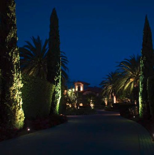 The tall, thin beam of light from a 10° Beam Spread is ideal for grazing these cypress - Landscape Lighting Beam Spread and Light Control: Light where you want it